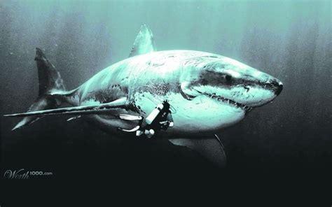 imagenes reales de un megalodon megalod 211 n el rey del arrecife en el tortuguero tabasco hoy