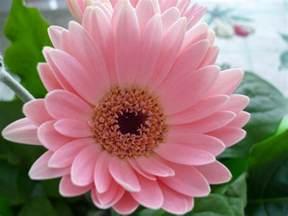 free flower pictures for wallpaper wallpapersafari