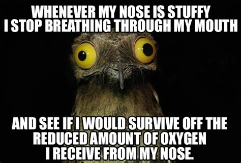 Nose Meme - blocked nose memes image memes at relatably com