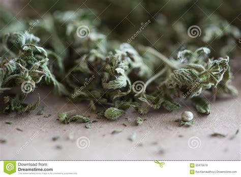 Renewing Green Card With Criminal Record Marijuana Stock Photo Image 60475678