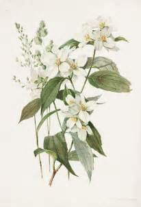What Are Botanicals 17 Best Ideas About Botanical Illustration On