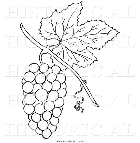 grape leaves coloring pages free coloring pages of grape vine leaves