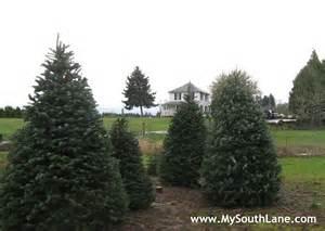 selecting a christmas tree