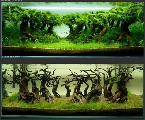 aquascaping ideas for planted tank 25 best aquascaping ideas on pinterest
