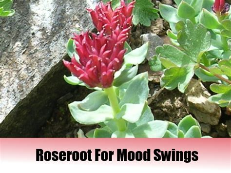 home remedies for mood swings homeopathic remedies for mood swings 28 images 5 top