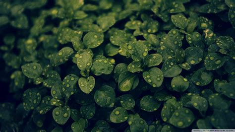 plant wallpaper dark green plant wallpaper 929362