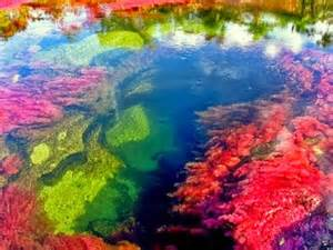 river of 5 colors amazing place ca 241 o cristales a five color river in colombia