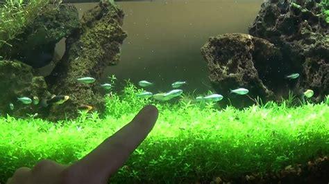 diy planted aquarium led lighting youtube