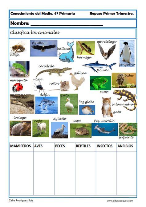 Collection of Conocimiento Del Medio Cuarto Animales Invertebrados ...