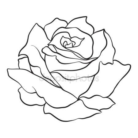 isolated rose outline drawing stock vector illustration