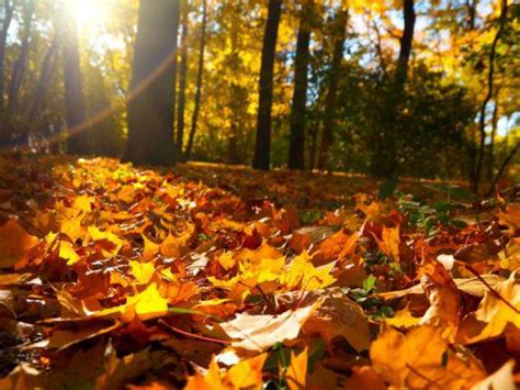 what makes leaves change color what makes leaves change color in the fall highland
