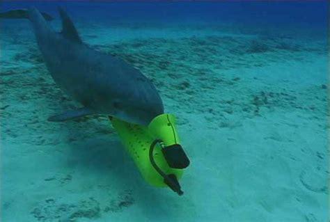 illustres execrables dauphin soldat en images dinosoria