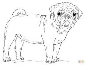 pug coloring pages pug coloring page free printable coloring pages