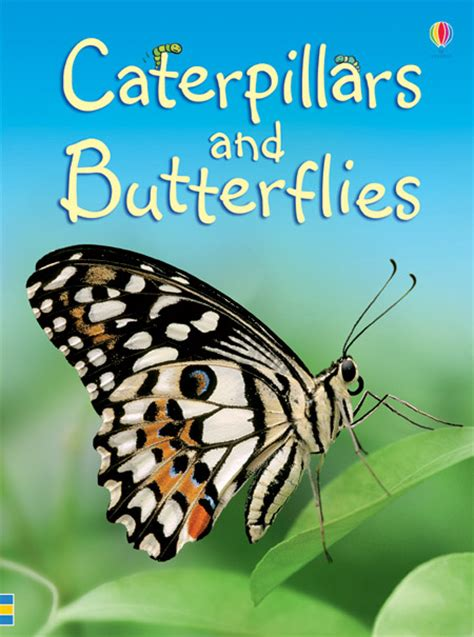 butterfly picture books caterpillars and butterflies at usborne books at home