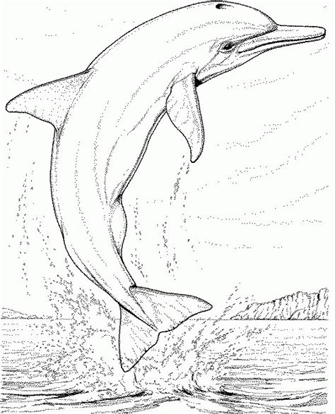 coloring pages for adults dolphins dolphin coloring pages coloringpagesabc com