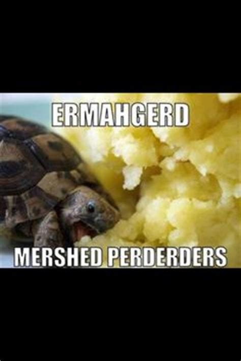 can dogs eat mashed potatoes ermahgerd on