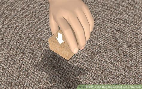 urine out of rug 3 ways to get urine smell out of carpets wikihow