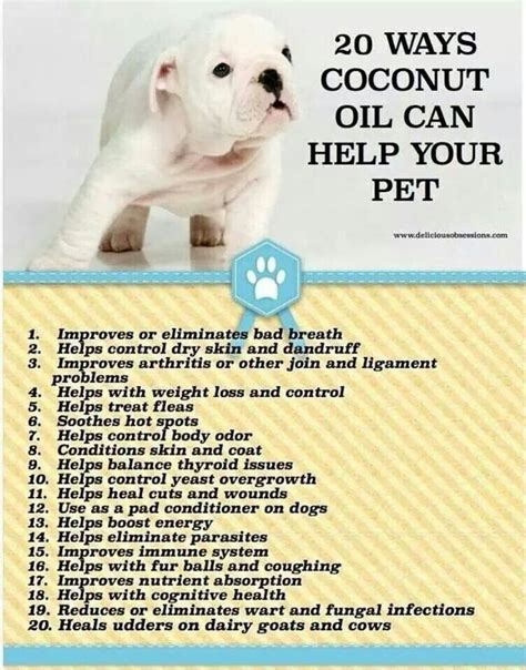benefits of coconut for dogs 310 best images about aye chihuahua ℜℯ aℓł 223 252 т ℑt on