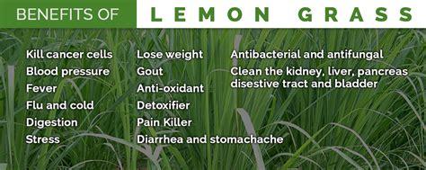 Medicinal and Health Beneficial Properties of LemonGrass ... Lemongrass Benefits Cancer