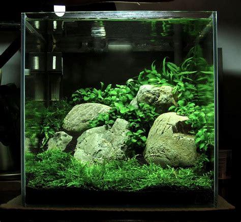 Shrimp Tank Aquascape by 25 Best Ideas About Nano Aquarium On