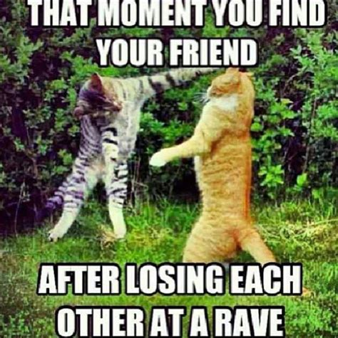 Raver Meme - rave cat stolen from rave memes fb pg way of life