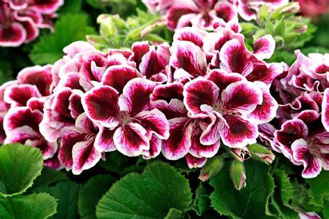 fiori aprile in edicola dal 25 marzo casa in fiore di aprile cose di casa