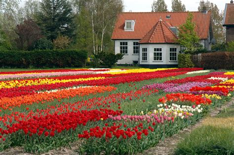 House With Flowers | flower houses xcitefun net