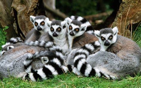 imagenes de animales en extincion fotos de animales en peligro de extinci 211 n im 225 genes