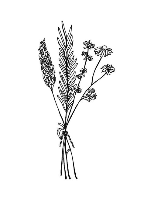 herb bouquet drawing by jessica mileur