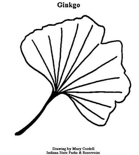 Coloring Pages Ginkgo Tree | dnr coloring pages plants