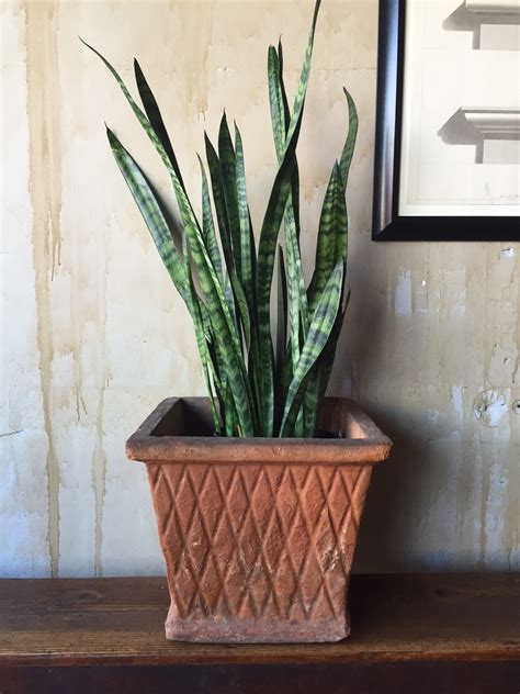Square Terracotta Planters by Square Terra Cotta Planter Omero Home