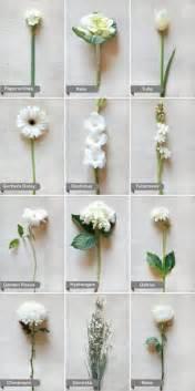25 best ideas about flower names on pinterest flower