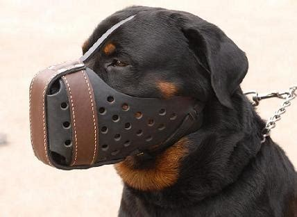 k9 rottweiler agitation muzzle leather muzzle for rottweiler m55 1060 k9