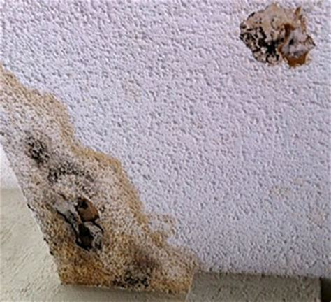 Is Popcorn Ceiling Toxic by Remove Mold From Popcorn Ceilings Clean Mold From Popcorn