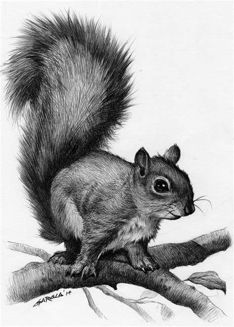 squirrel drawing squirrels blyer