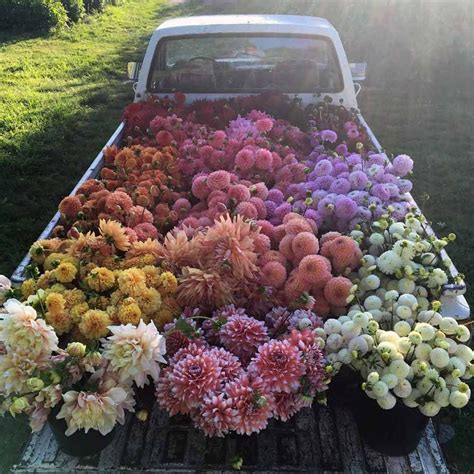 bed bud an abundance of flowers romantic homes
