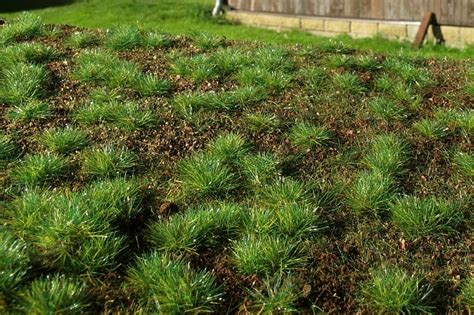 Model Grass Mats by Grass Mats And Turfs Forest Base Dense Forest E Shop
