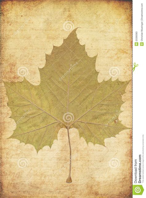 grunge background with autumn leaves stock photos image