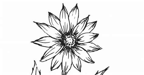 lukisan bunga matahari gambar bunga hitam putih gambar