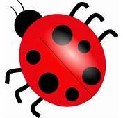 Cartoon Ladybug Clipart  Kid