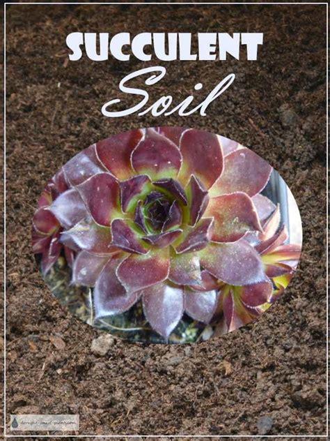 succulent soil good drainage happy succulent plants