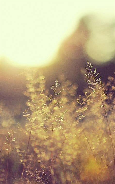 nature iphone   wallpapers blurred grass bokeh