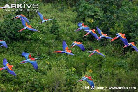 Jual Burung Macaw Kaskus 10 jenis burung paling indah di dunia kaskus