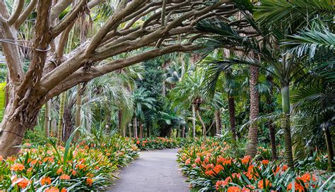 The Royal Botanic Gardens Sydney Connecting Sydney S Royal Botanic Gardens Nbn Australia S New Broadband Access Network