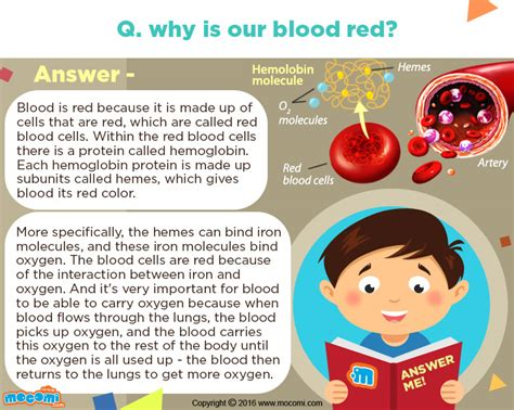 what color is our blood why is blood in colour answer me for mocomi