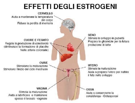 alimenti con estrogeni per seno gli estrogeni prima pagina