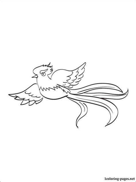 quetzal bird coloring page quetzal coloring page to print out coloring pages deer
