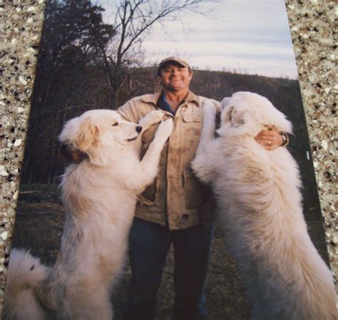 great pyrenees puppies price great pyrenees livestock guardian dogs