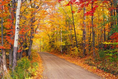 best fall colors 7 best fall foliage trips globus