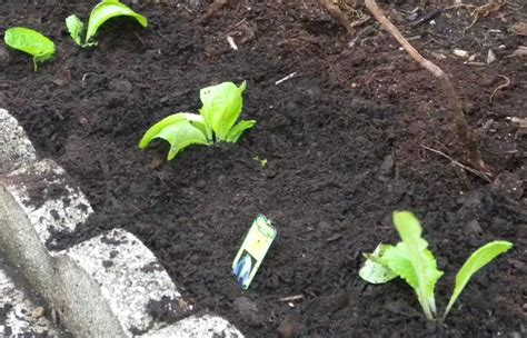 south florida vegetable gardening it is time to plant your south florida vegetable garden